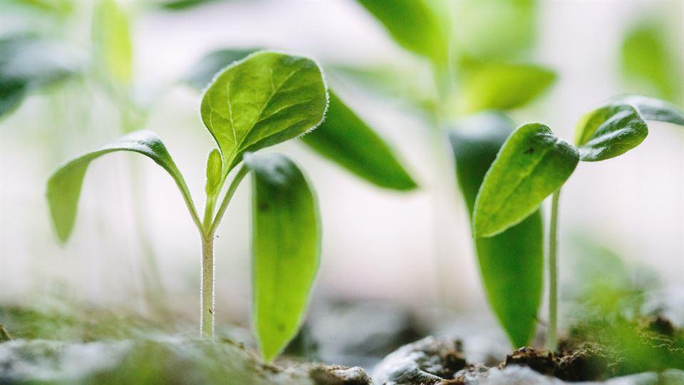 Planta - Foodtech