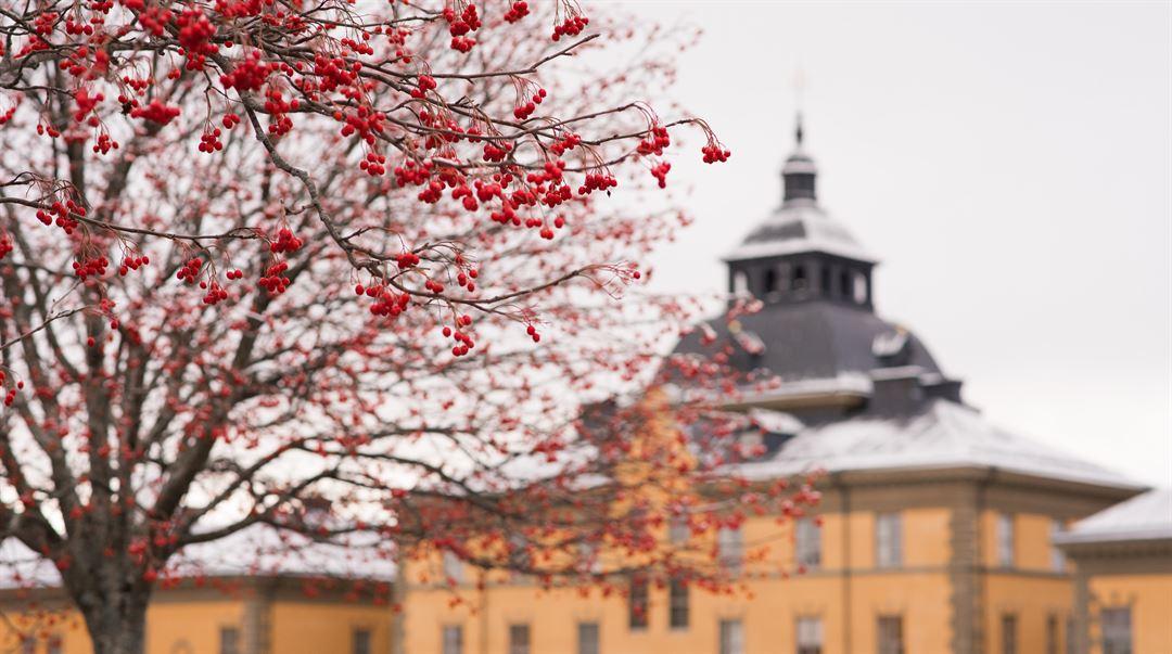 Rönnbär Campus Östersund