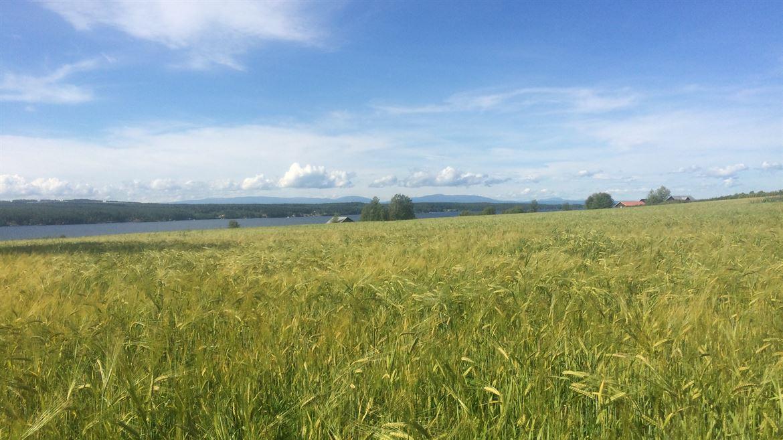 Odlingslandskap Jämtland