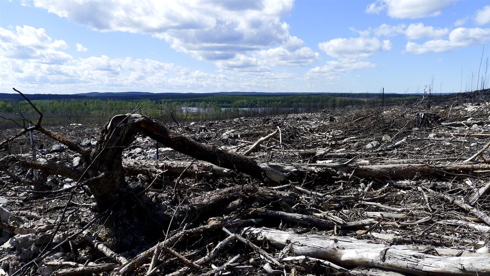 Utbränd skog