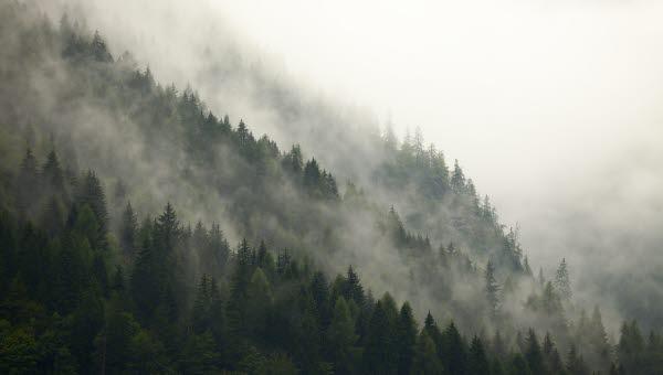 Dimma över skog